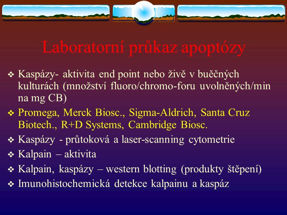 Laboratorní průkaz apoptózy