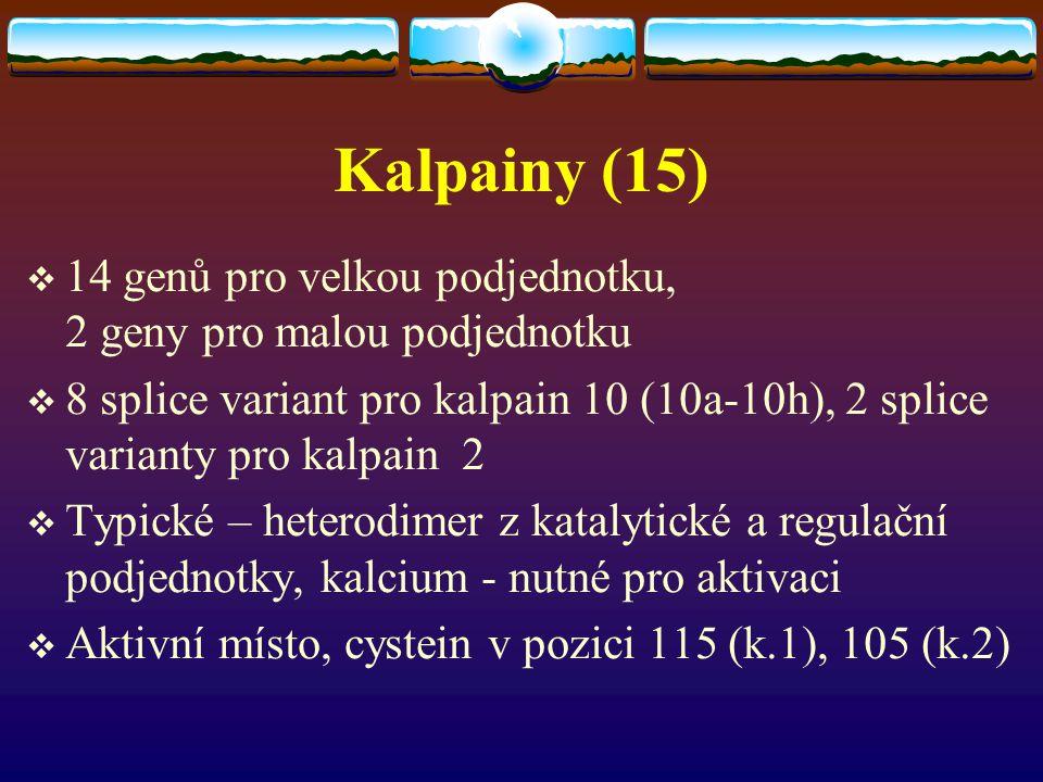 Kalpainy (15) 14 genů pro velkou podjednotku, 2 geny pro malou podjednotku.