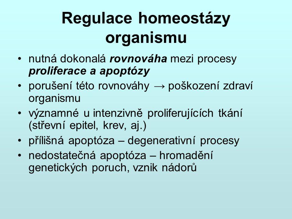 Regulace homeostázy organismu