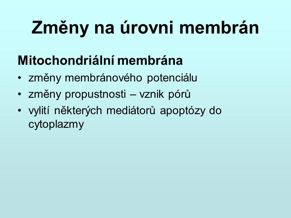 Změny na úrovni membrán