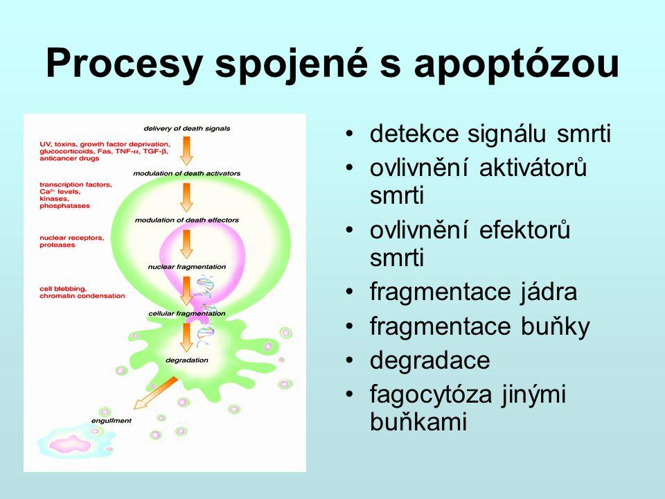 Procesy spojené s apoptózou