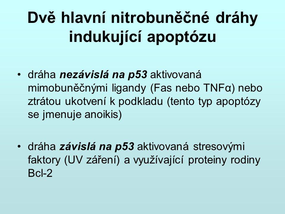 Dvě hlavní nitrobuněčné dráhy indukující apoptózu