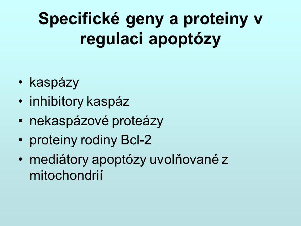 Specifické geny a proteiny v regulaci apoptózy