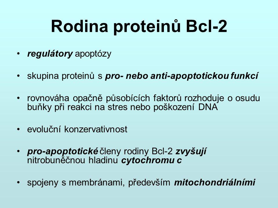 Rodina proteinů Bcl-2 regulátory apoptózy