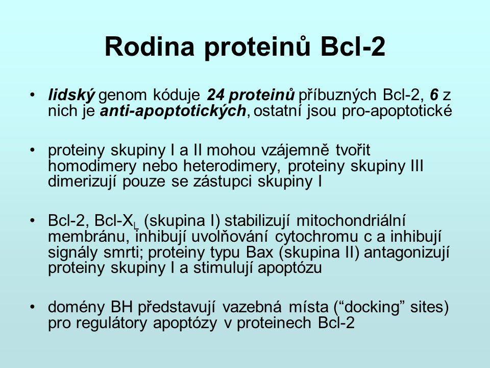 Rodina proteinů Bcl-2 lidský genom kóduje 24 proteinů příbuzných Bcl-2, 6 z nich je anti-apoptotických, ostatní jsou pro-apoptotické.