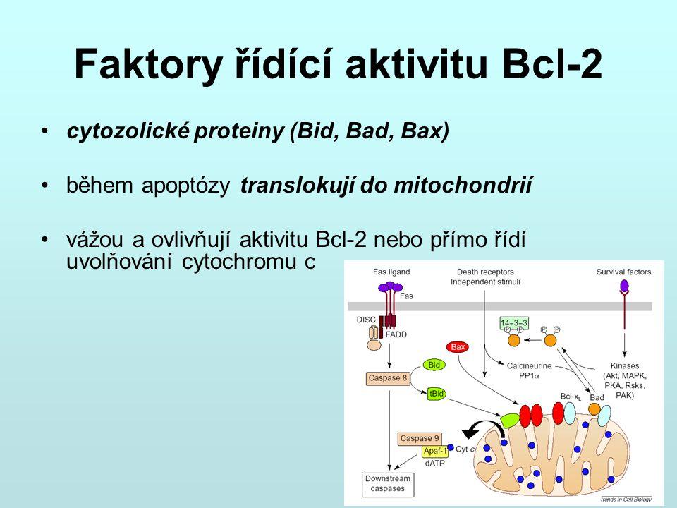 Faktory řídící aktivitu Bcl-2