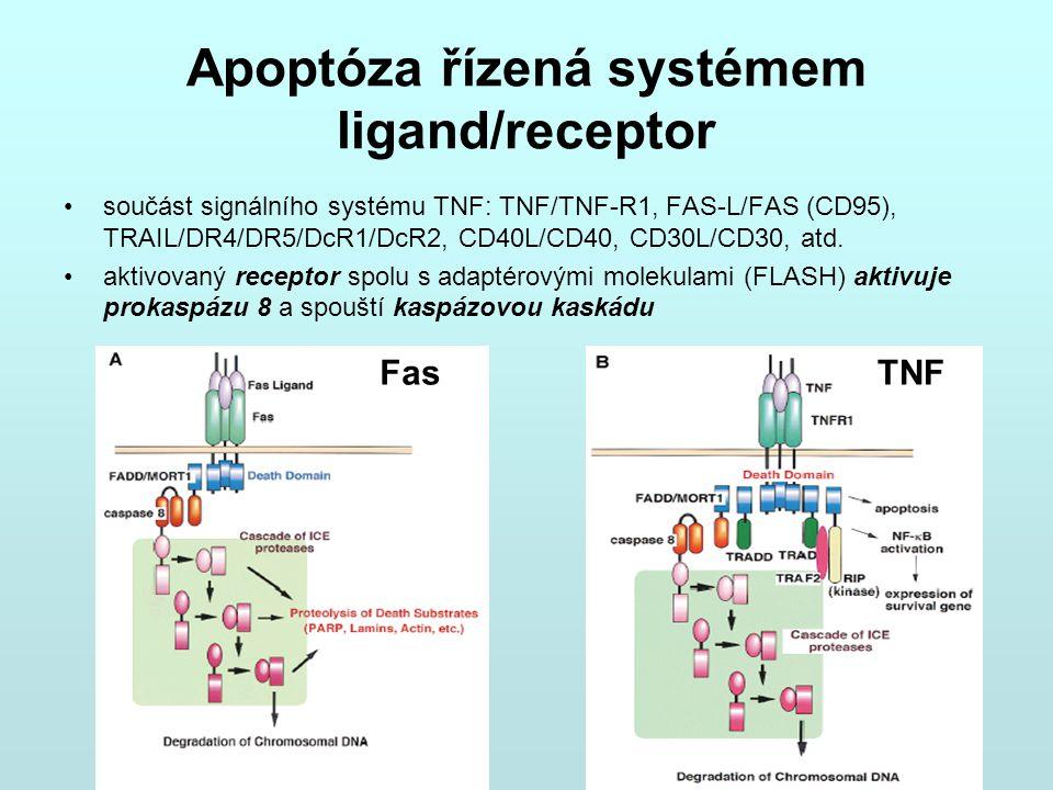 Apoptóza řízená systémem ligand/receptor