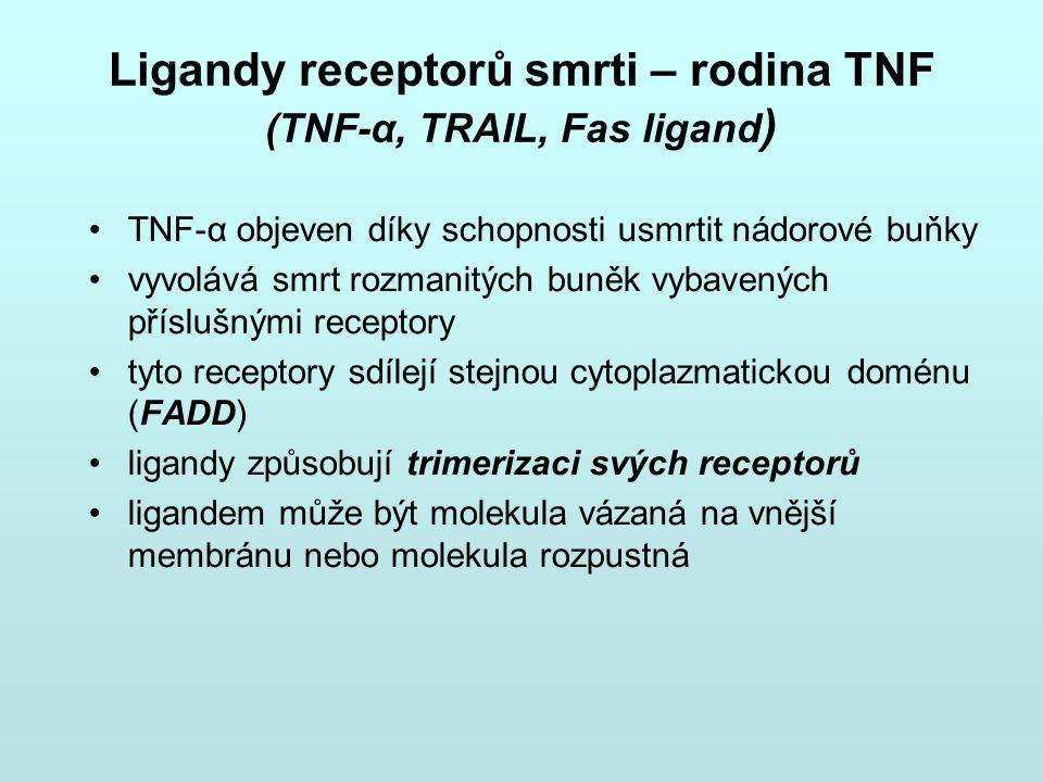 Ligandy receptorů smrti – rodina TNF (TNF-α, TRAIL, Fas ligand)
