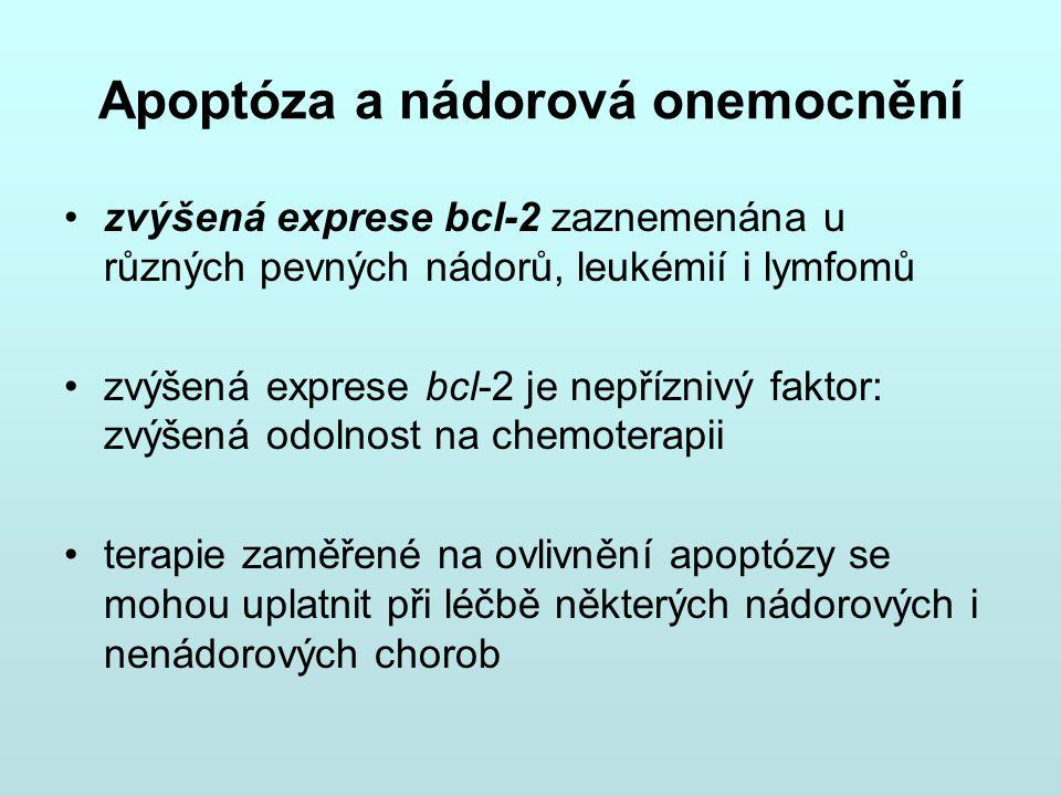 Apoptóza a nádorová onemocnění