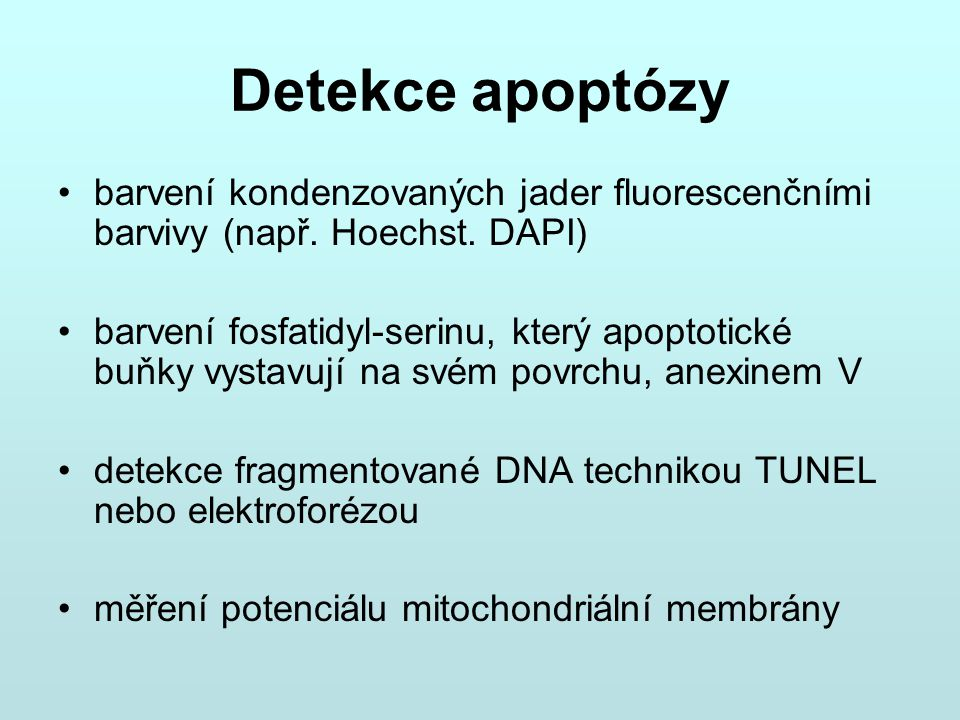 Detekce apoptózy barvení kondenzovaných jader fluorescenčními barvivy (např. Hoechst. DAPI)