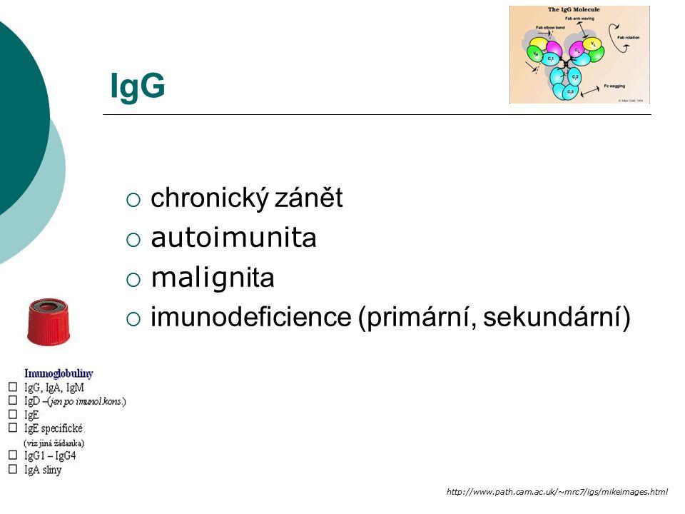 IgG chronický zánět autoimunita malignita