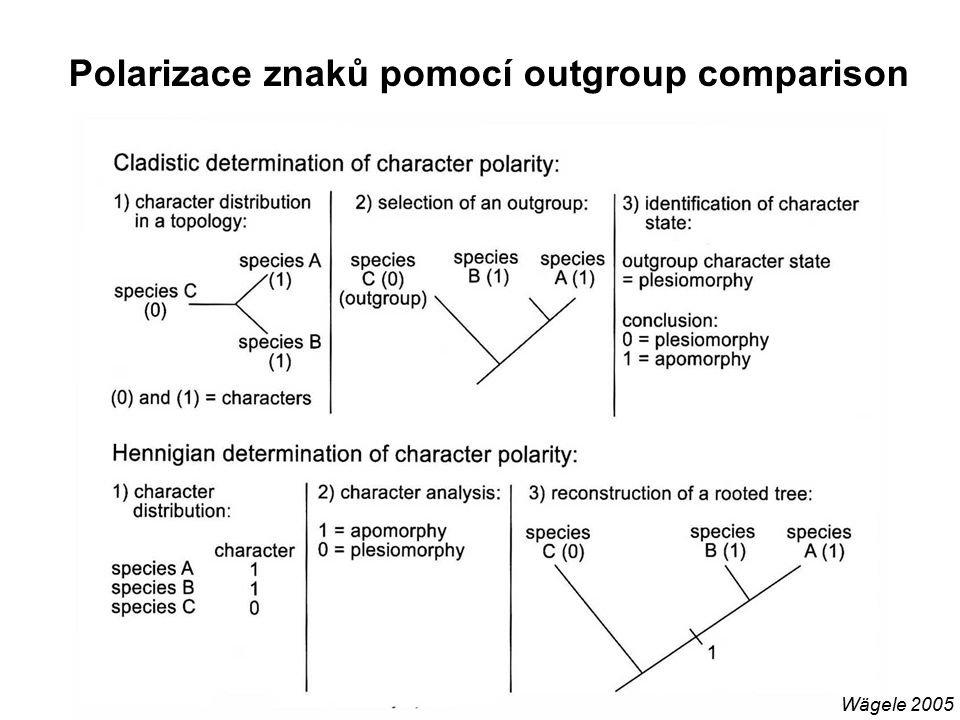 Polarizace znaků pomocí outgroup comparison