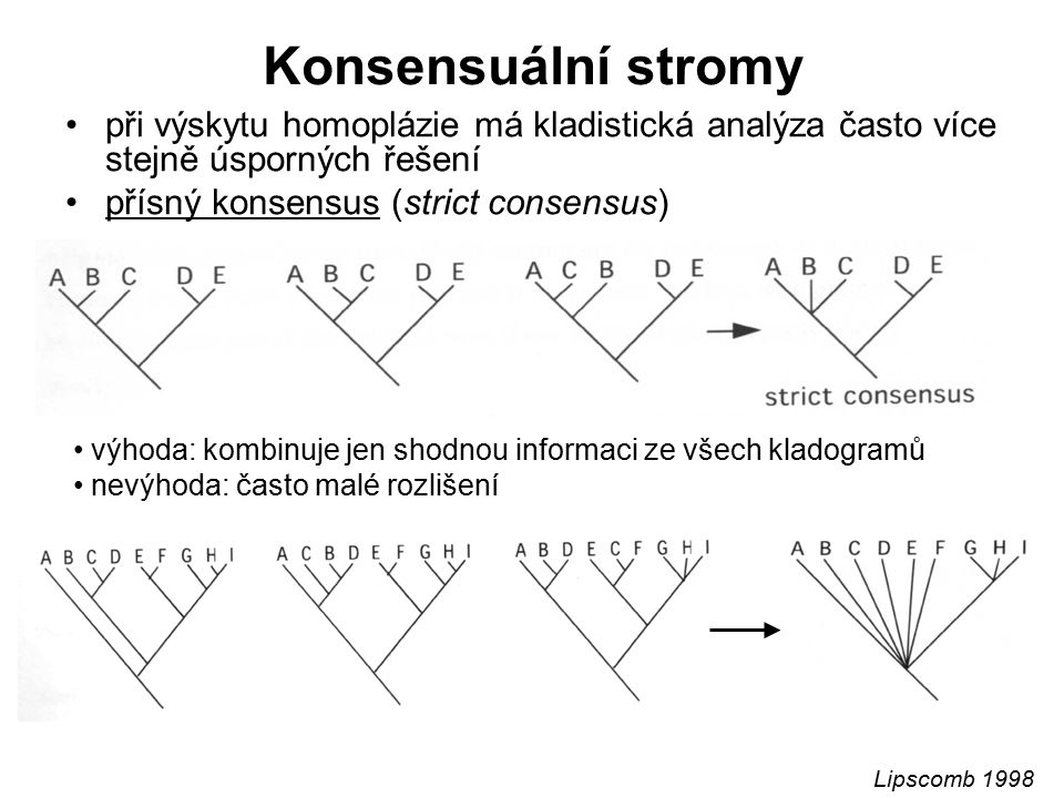 Konsensuální stromy při výskytu homoplázie má kladistická analýza často více stejně úsporných řešení.