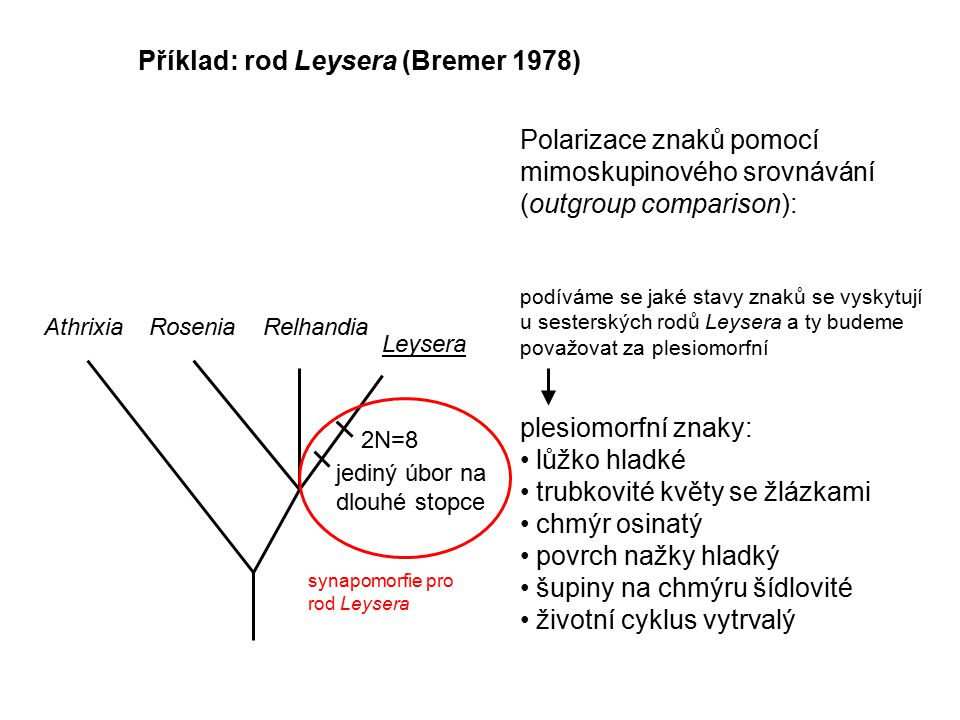 Příklad: rod Leysera (Bremer 1978)