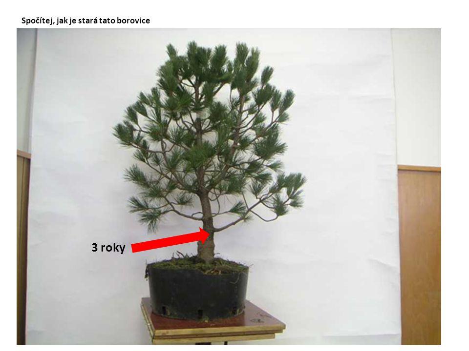 Spočítej, jak je stará tato borovice