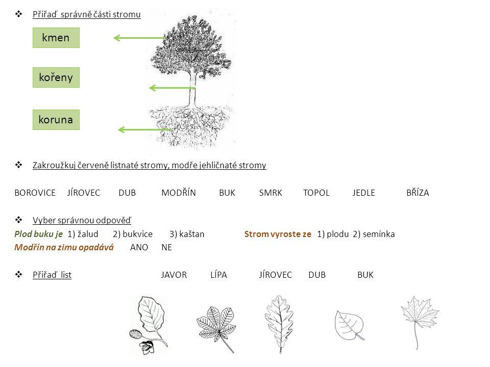 kmen kořeny koruna Přiřaď správně části stromu
