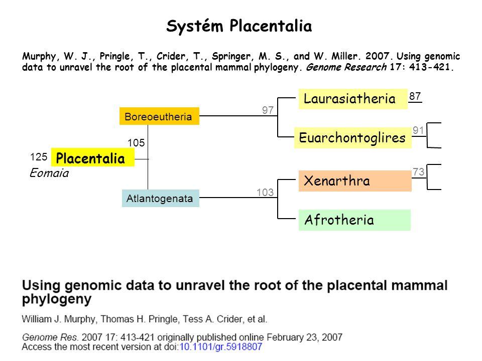 Systém Placentalia Laurasiatheria Euarchontoglires Placentalia