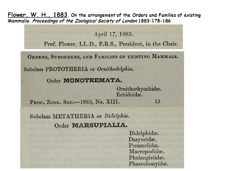 Flower, W. H., 1883. On the arrangement of the Orders and Families of existing Mammalia.