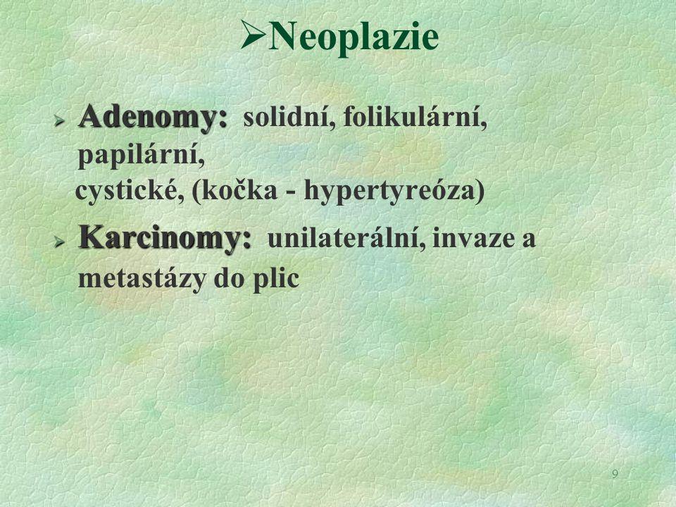Neoplazie Adenomy: solidní, folikulární, papilární,