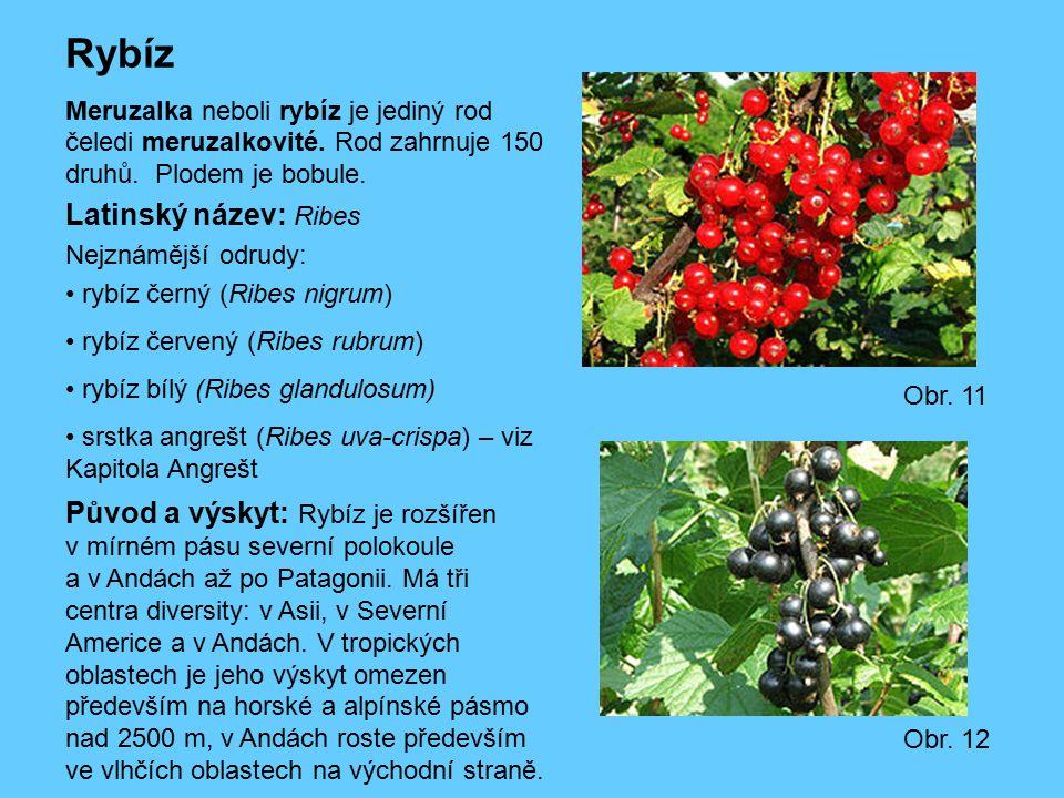 Rybíz Latinský název: Ribes