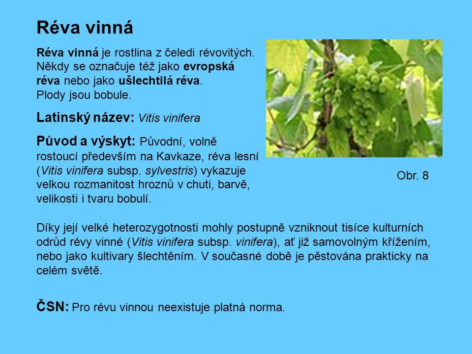 Réva vinná Latinský název: Vitis vinifera