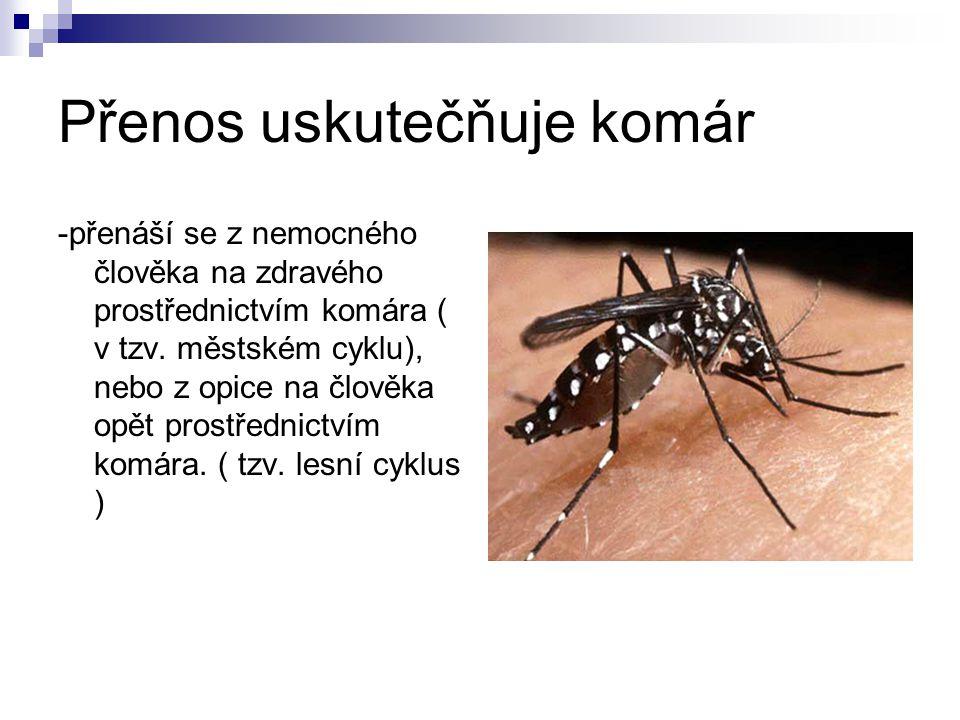 Přenos uskutečňuje komár