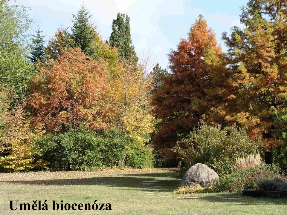Umělá biocenóza