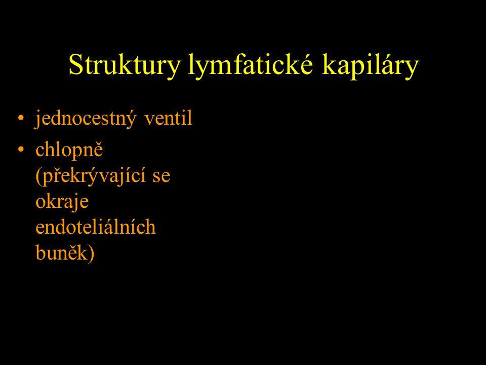 Struktury lymfatické kapiláry