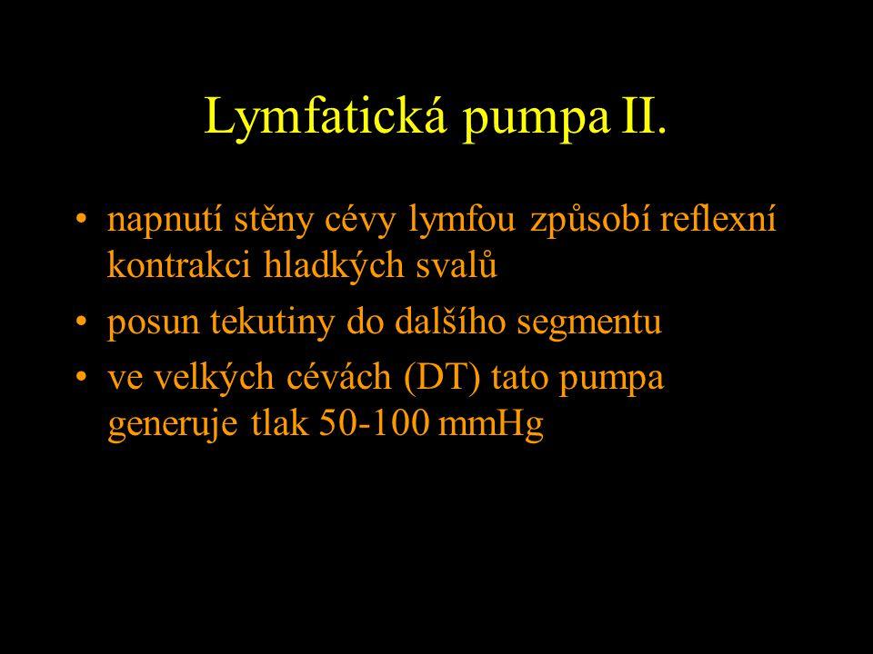Lymfatická pumpa II. napnutí stěny cévy lymfou způsobí reflexní kontrakci hladkých svalů. posun tekutiny do dalšího segmentu.