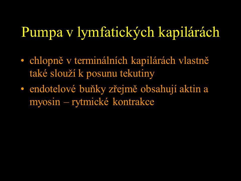 Pumpa v lymfatických kapilárách