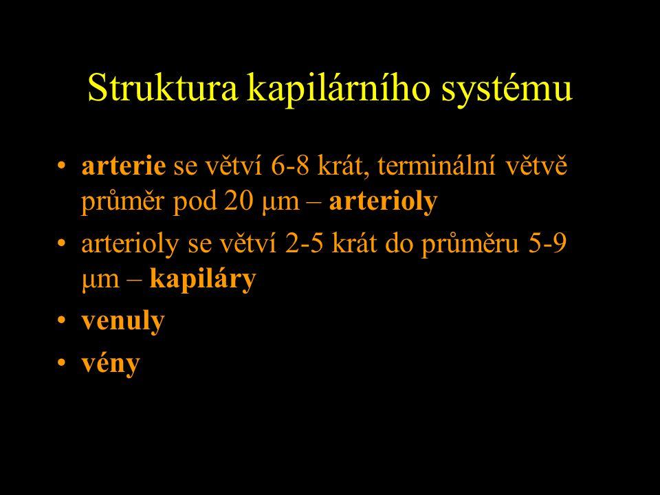 Struktura kapilárního systému