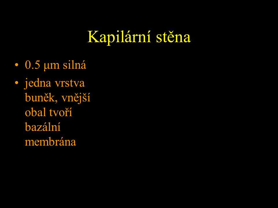 Kapilární stěna 0.5 μm silná