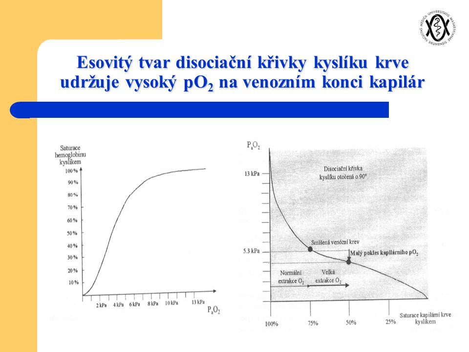 Esovitý tvar disociační křivky kyslíku krve udržuje vysoký pO2 na venozním konci kapilár