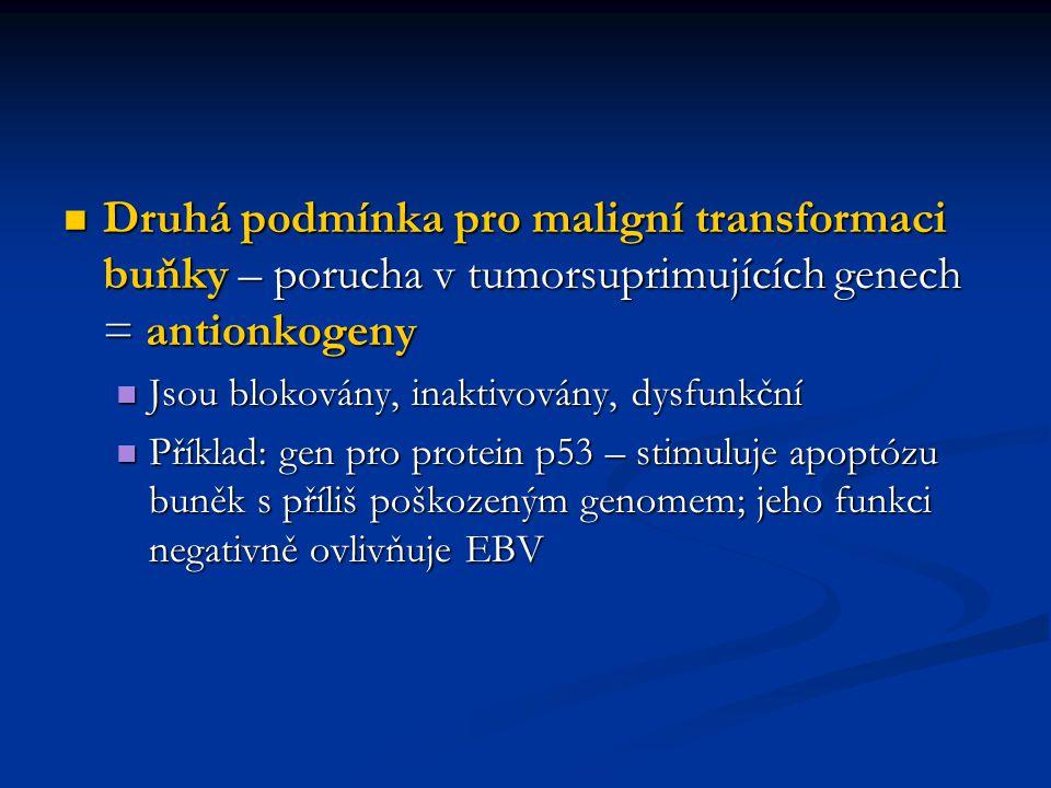 Druhá podmínka pro maligní transformaci buňky – porucha v tumorsuprimujících genech = antionkogeny
