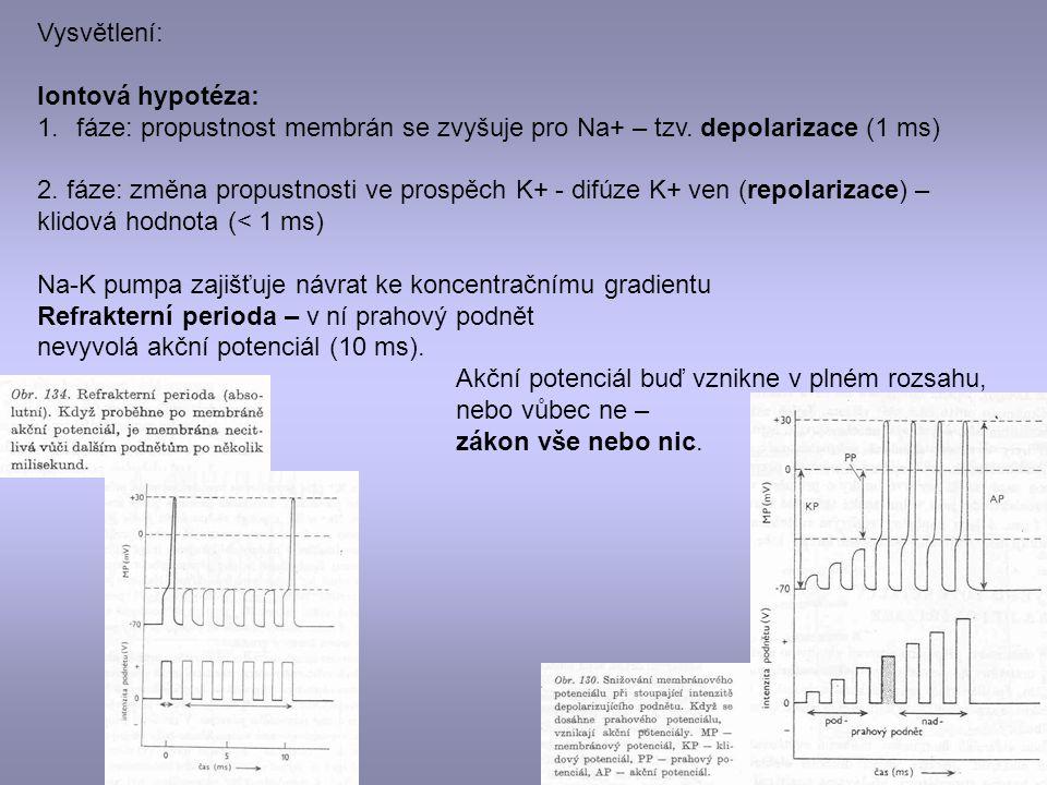 Vysvětlení: Iontová hypotéza: fáze: propustnost membrán se zvyšuje pro Na+ – tzv. depolarizace (1 ms)