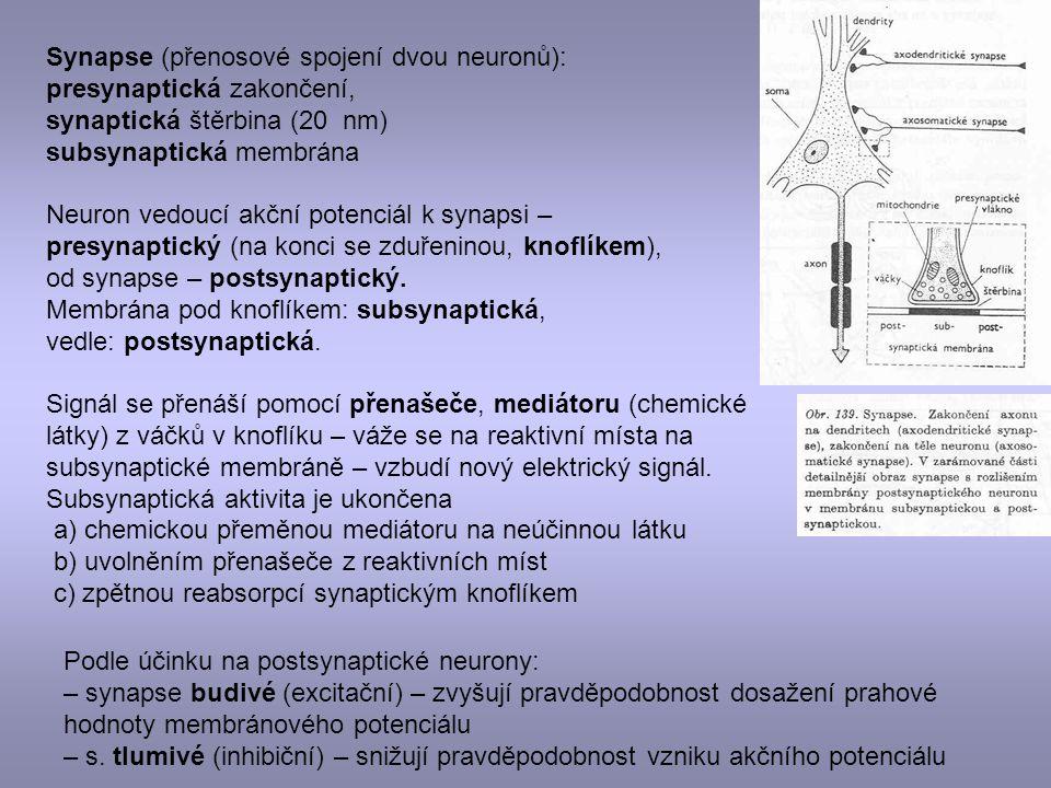 Synapse (přenosové spojení dvou neuronů):
