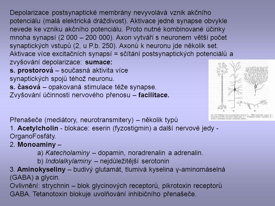 Depolarizace postsynaptické membrány nevyvolává vznik akčního potenciálu (malá elektrická dráždivost). Aktivace jedné synapse obvykle nevede ke vzniku akčního potenciálu. Proto nutné kombinované účinky mnoha synapsí (2 000 – 200 000). Axon vytváří s neuronem větší počet synaptických vstupů (2, u P.b. 250). Axonů k neuronu jde několik set. Aktivace více excitačních synapsí = sčítání postsynaptických potenciálů a zvyšování depolarizace: sumace: