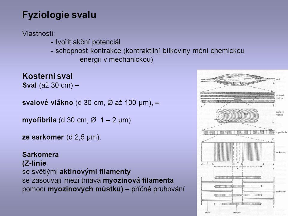 Fyziologie svalu Kosterní sval Vlastnosti: - tvořit akční potenciál