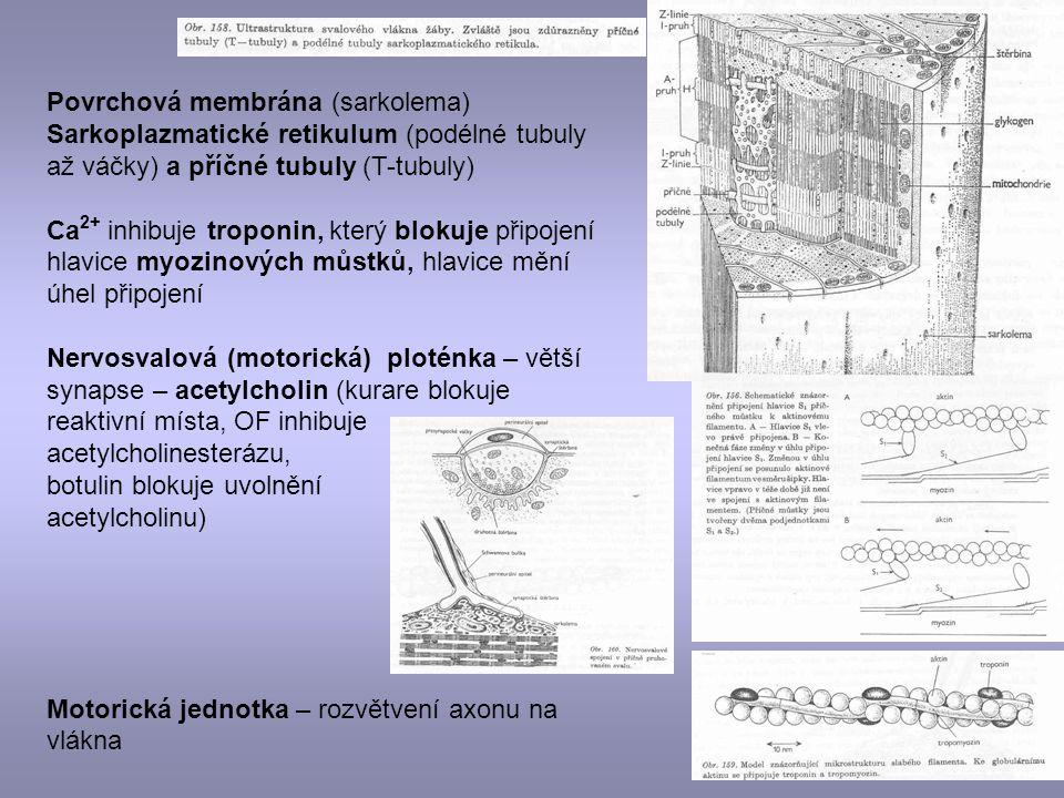 Povrchová membrána (sarkolema)