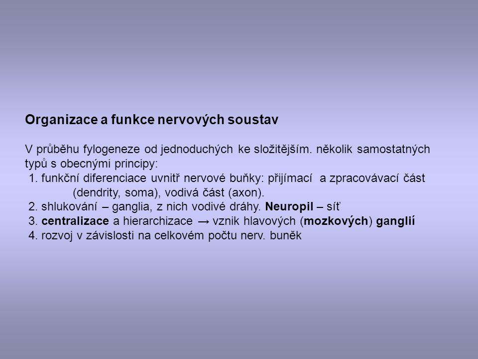Organizace a funkce nervových soustav