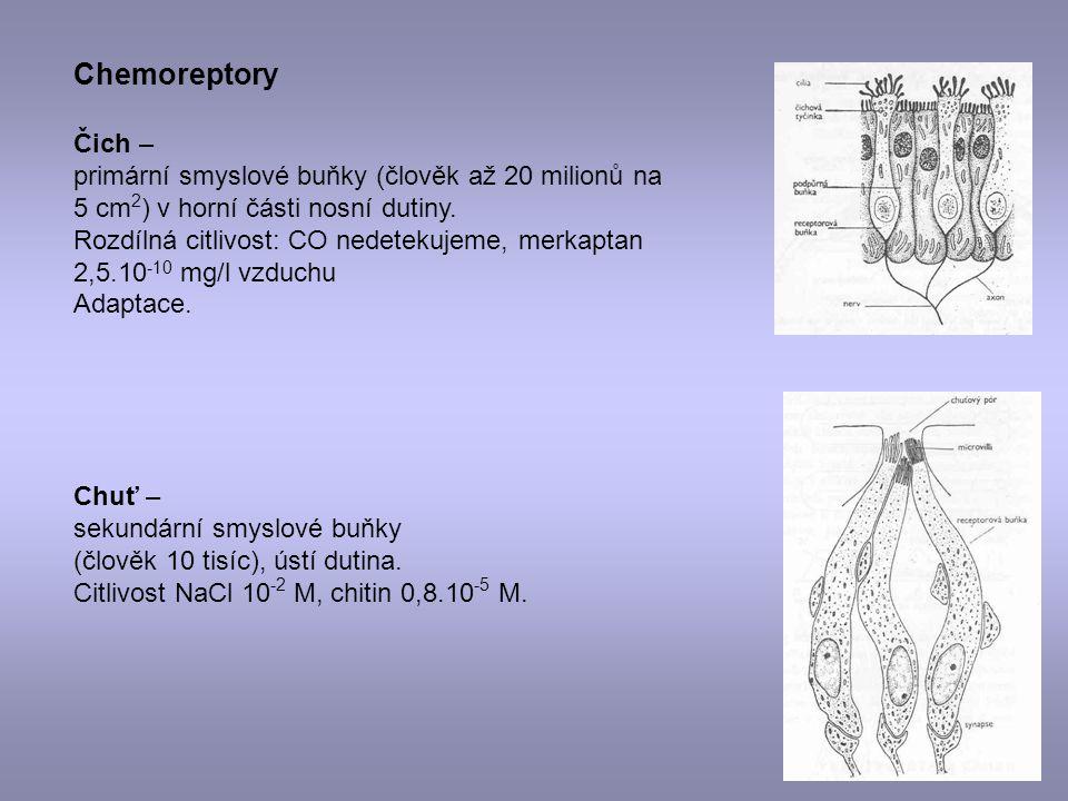Chemoreptory Čich – primární smyslové buňky (člověk až 20 milionů na 5 cm2) v horní části nosní dutiny.