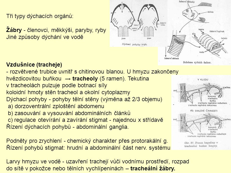 Tři typy dýchacích orgánů: