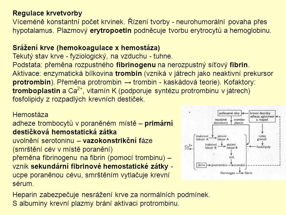 Regulace krvetvorby