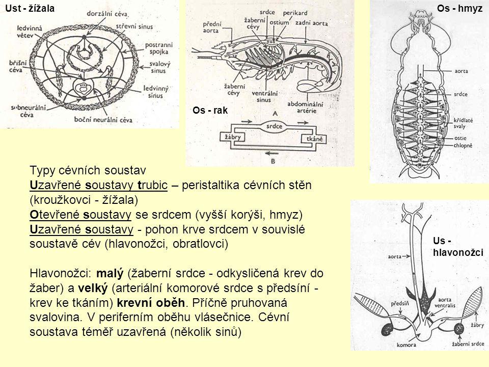 Otevřené soustavy se srdcem (vyšší korýši, hmyz)