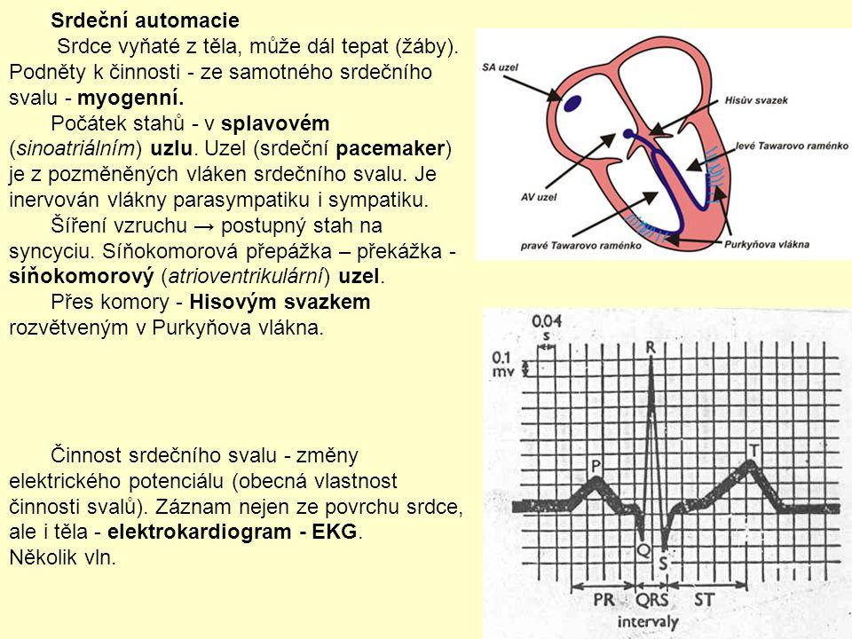 Srdeční automacie Srdce vyňaté z těla, může dál tepat (žáby). Podněty k činnosti - ze samotného srdečního svalu - myogenní.