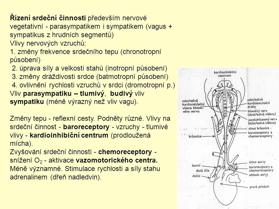 Řízení srdeční činnosti především nervové vegetativní - parasympatikem i sympatikem (vagus + sympatikus z hrudních segmentů)