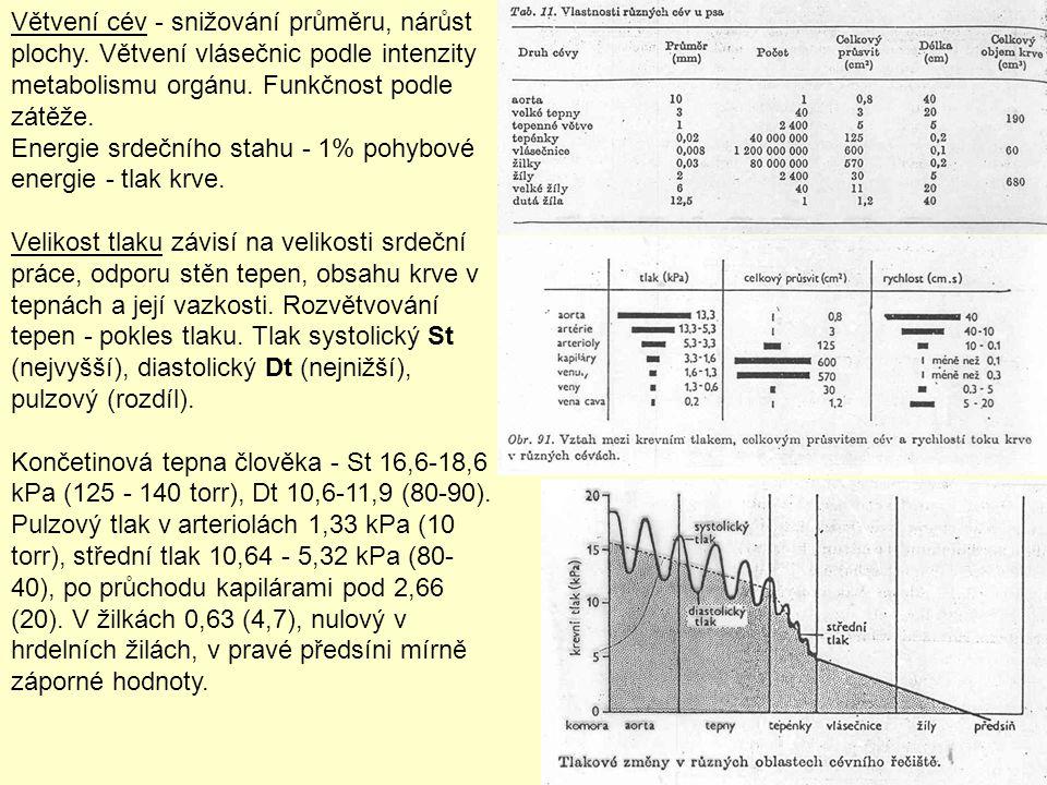 Větvení cév - snižování průměru, nárůst plochy