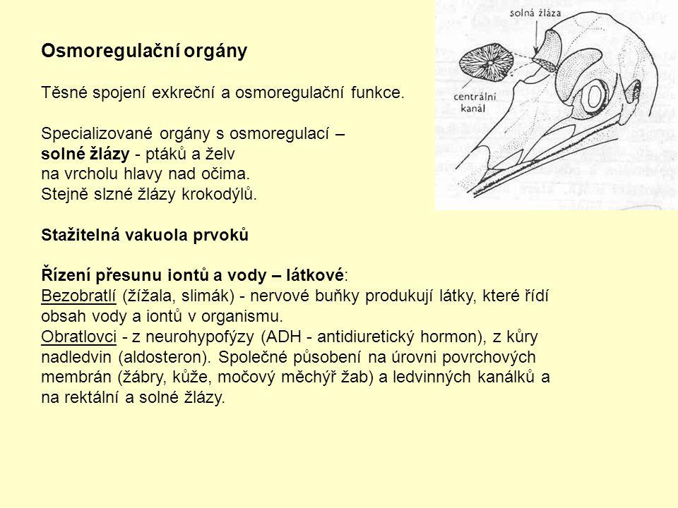 Osmoregulační orgány Těsné spojení exkreční a osmoregulační funkce.