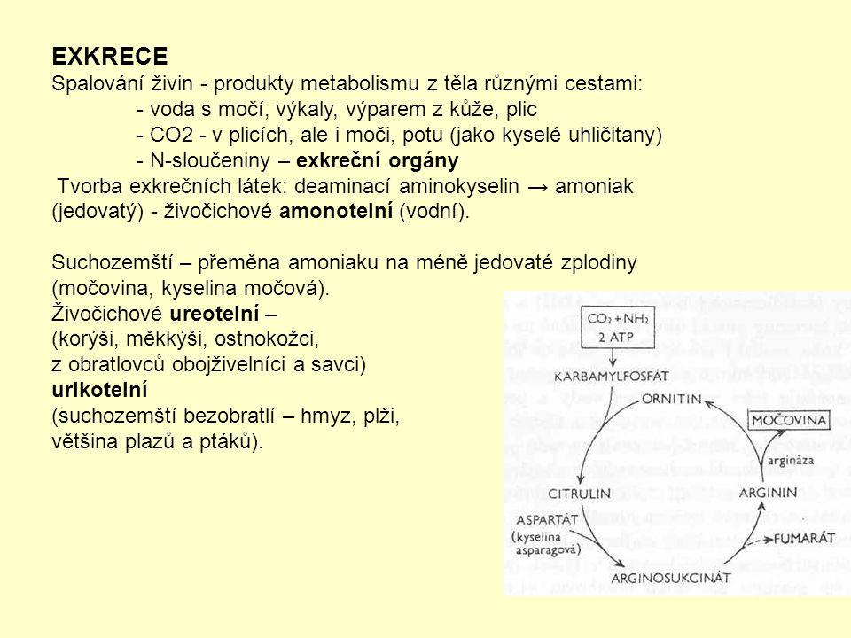 EXKRECE Spalování živin - produkty metabolismu z těla různými cestami: