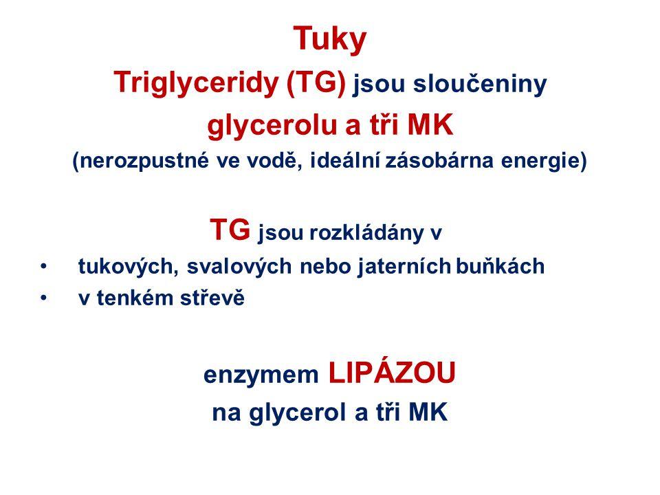Tuky Triglyceridy (TG) jsou sloučeniny glycerolu a tři MK